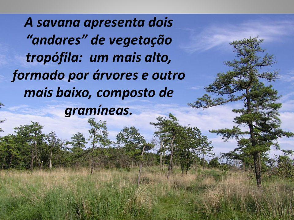 A savana apresenta dois andares de vegetação tropófila: um mais alto, formado por árvores e outro mais baixo, composto de gramíneas.