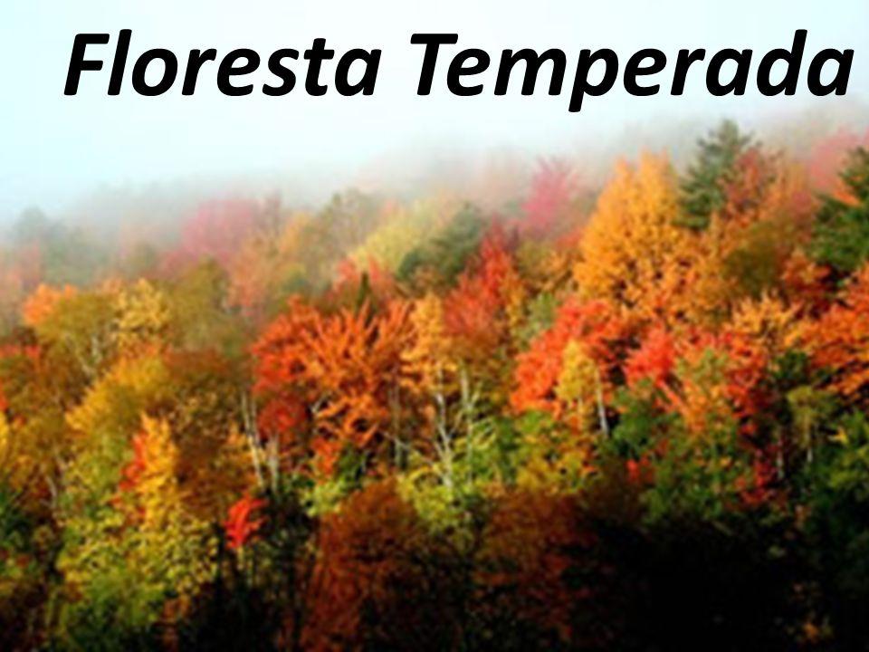 Floresta Temperada Floresta Temperada