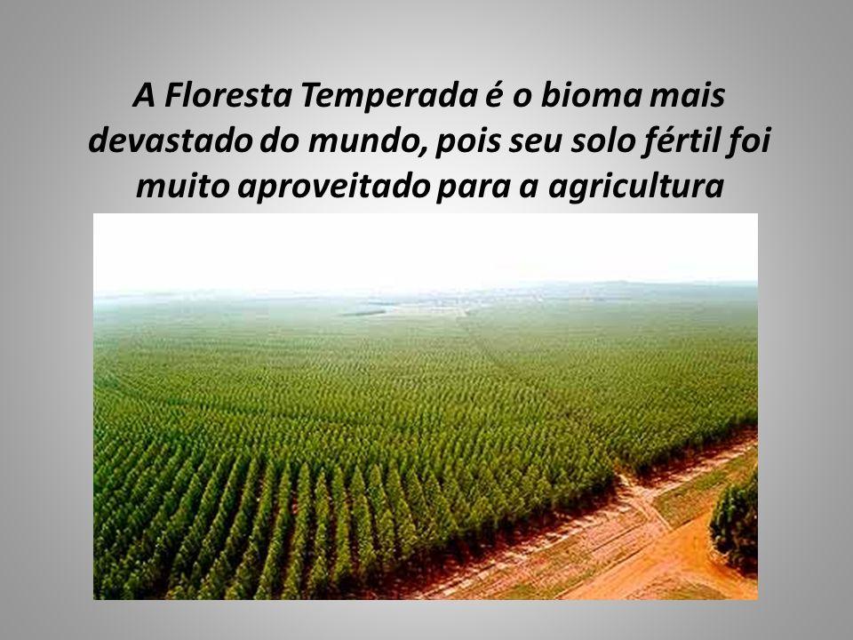 A Floresta Temperada é o bioma mais devastado do mundo, pois seu solo fértil foi muito aproveitado para a agricultura