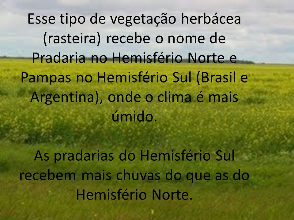 Esse tipo de vegetação herbácea (rasteira) recebe o nome de Pradaria no Hemisfério Norte e Pampas no Hemisfério Sul (Brasil e Argentina), onde o clima é mais úmido.