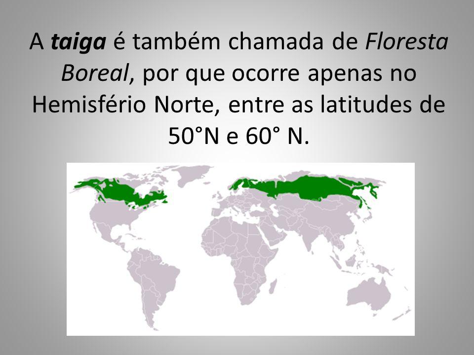 A taiga é também chamada de Floresta Boreal, por que ocorre apenas no Hemisfério Norte, entre as latitudes de 50°N e 60° N.