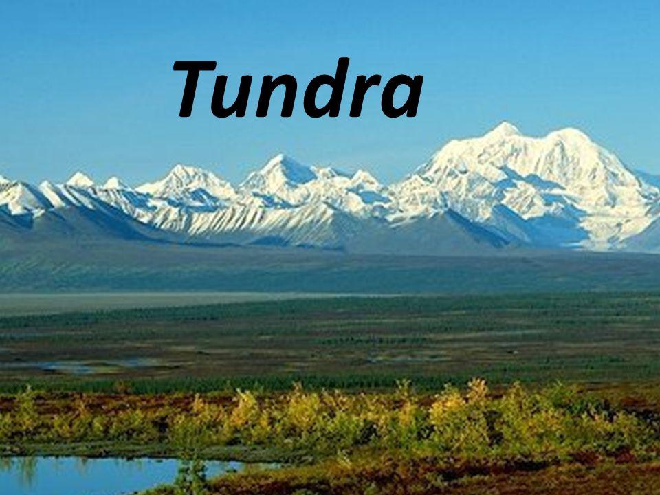 Tundra Tundra