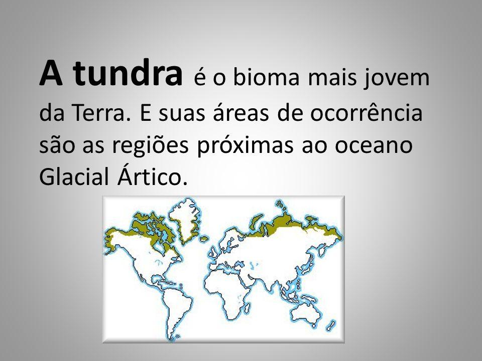 A tundra é o bioma mais jovem da Terra