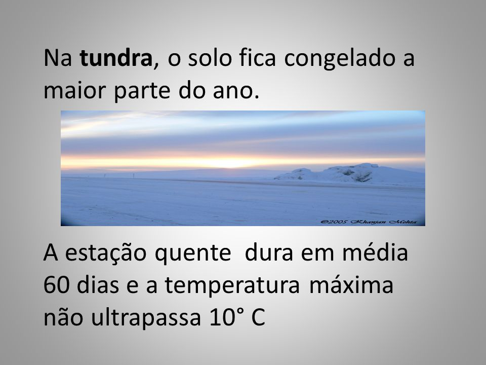 Na tundra, o solo fica congelado a maior parte do ano.