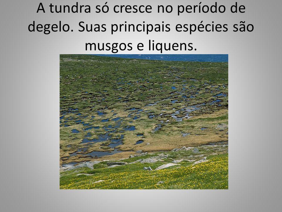 A tundra só cresce no período de degelo