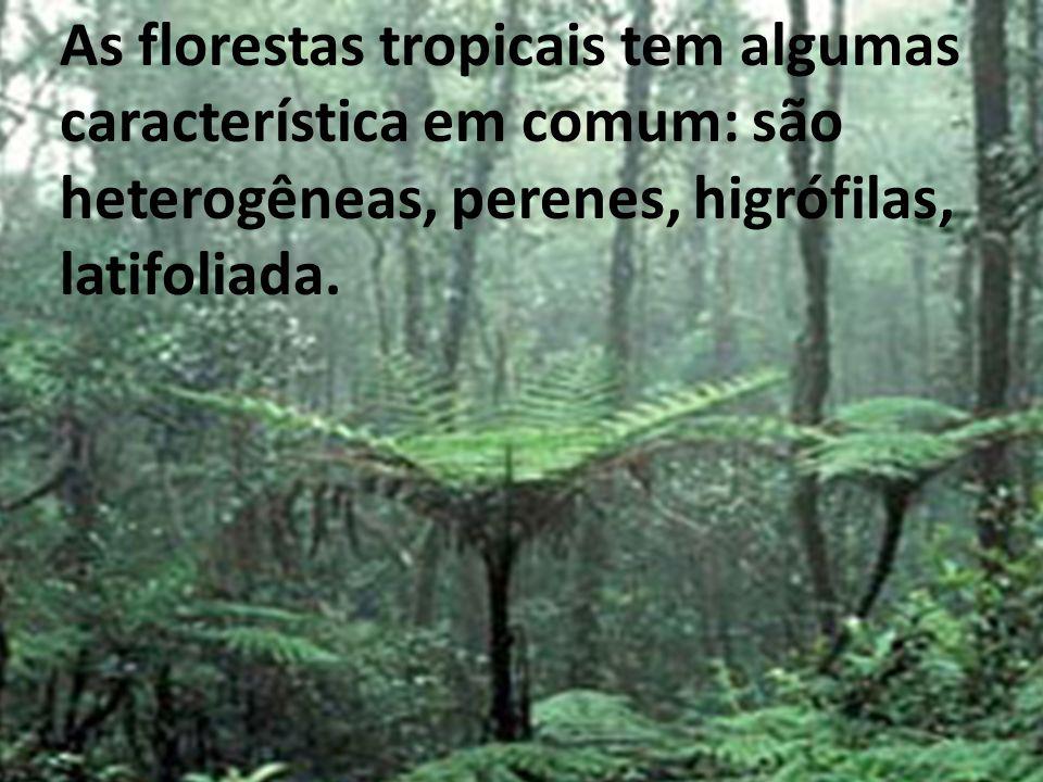 As florestas tropicais tem algumas característica em comum: são heterogêneas, perenes, higrófilas, latifoliada.