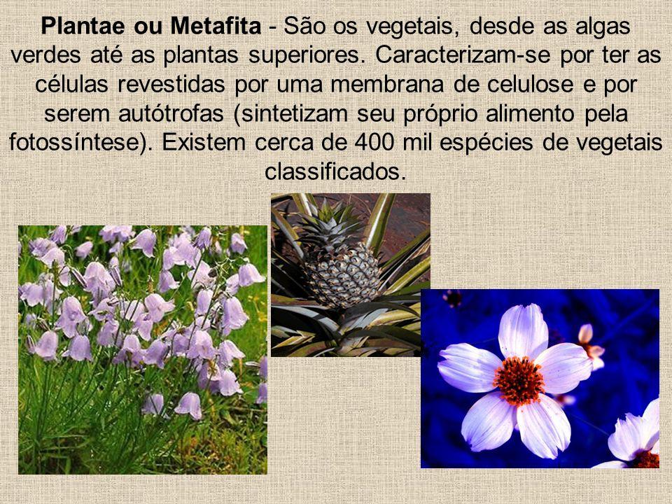 Plantae ou Metafita - São os vegetais, desde as algas verdes até as plantas superiores.