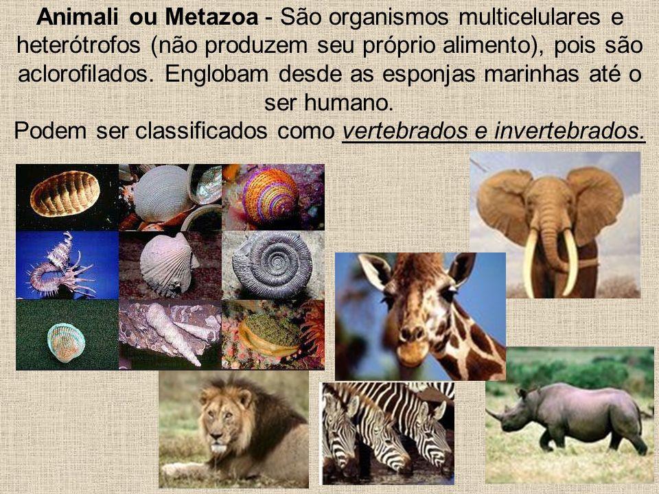 Podem ser classificados como vertebrados e invertebrados.