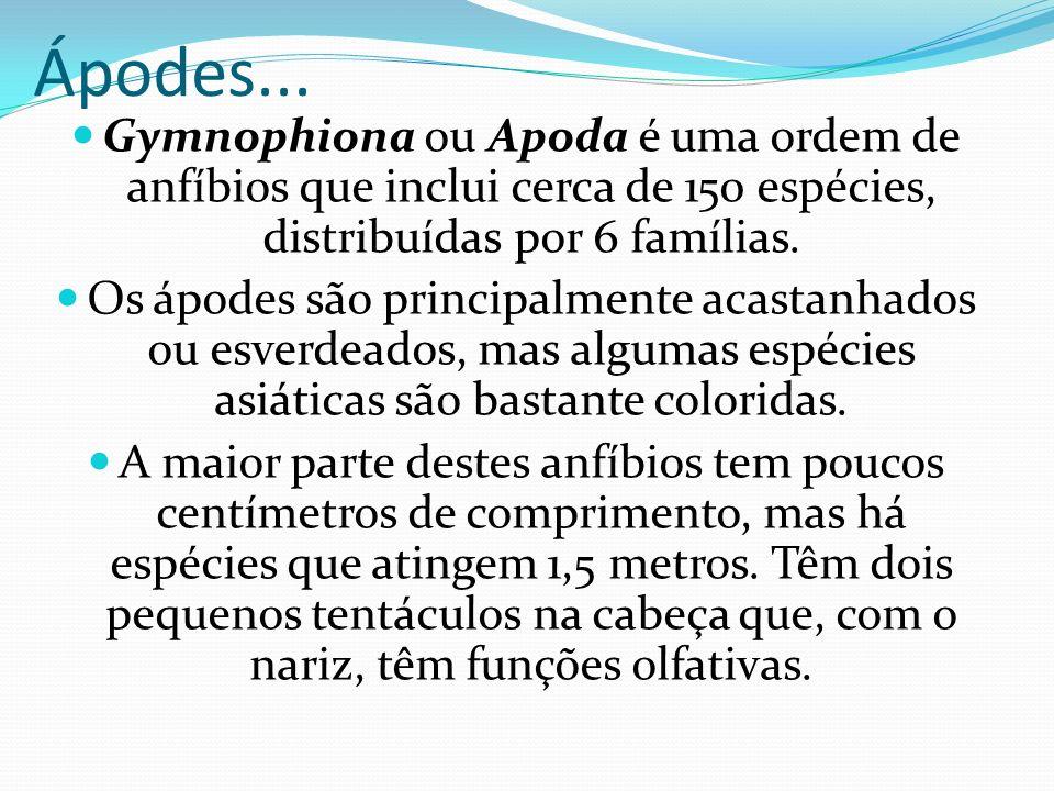 Ápodes... Gymnophiona ou Apoda é uma ordem de anfíbios que inclui cerca de 150 espécies, distribuídas por 6 famílias.