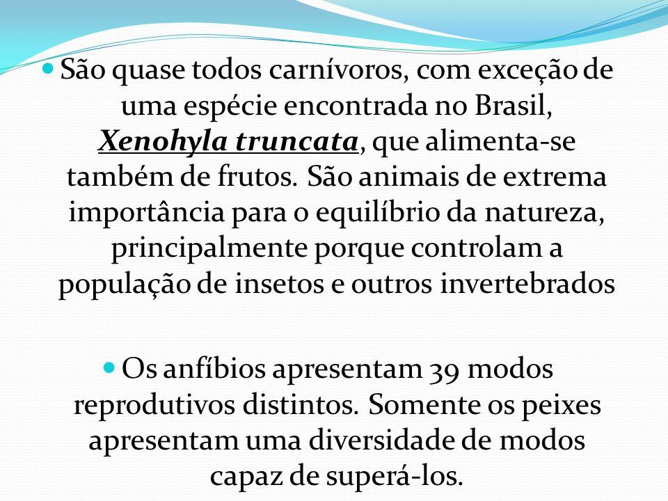 São quase todos carnívoros, com exceção de uma espécie encontrada no Brasil, Xenohyla truncata, que alimenta-se também de frutos. São animais de extrema importância para o equilíbrio da natureza, principalmente porque controlam a população de insetos e outros invertebrados