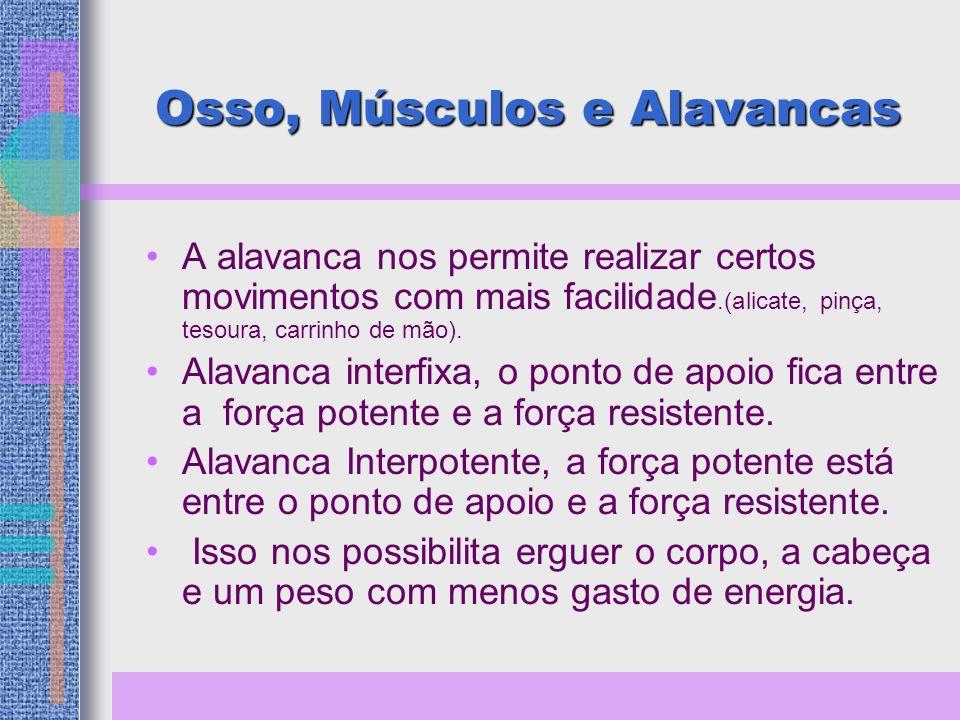 Osso, Músculos e Alavancas