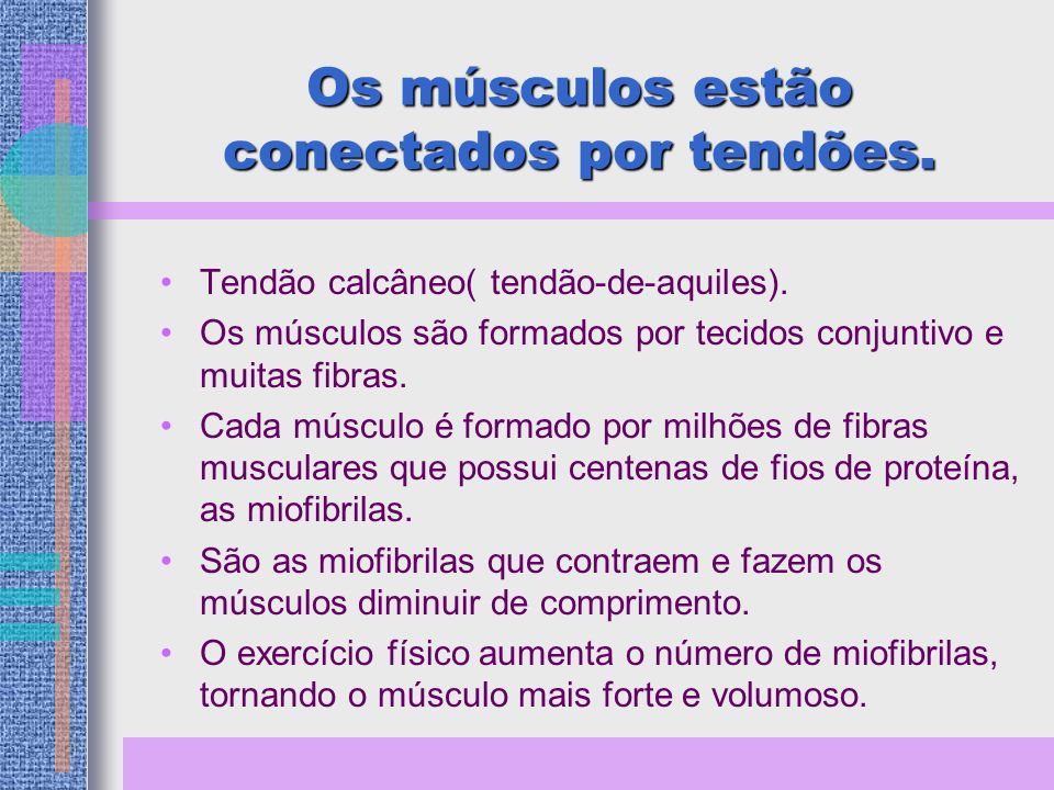 Os músculos estão conectados por tendões.