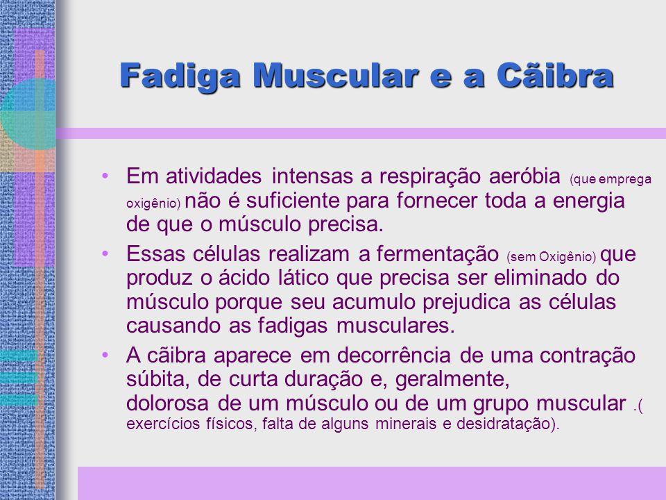 Fadiga Muscular e a Cãibra