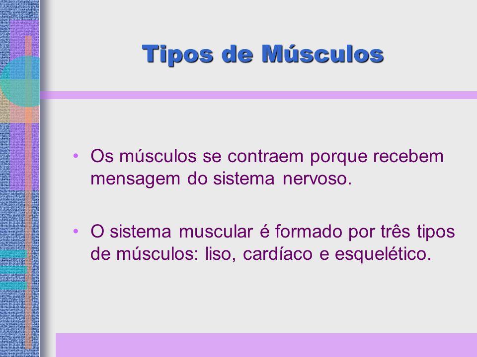 Tipos de Músculos Os músculos se contraem porque recebem mensagem do sistema nervoso.