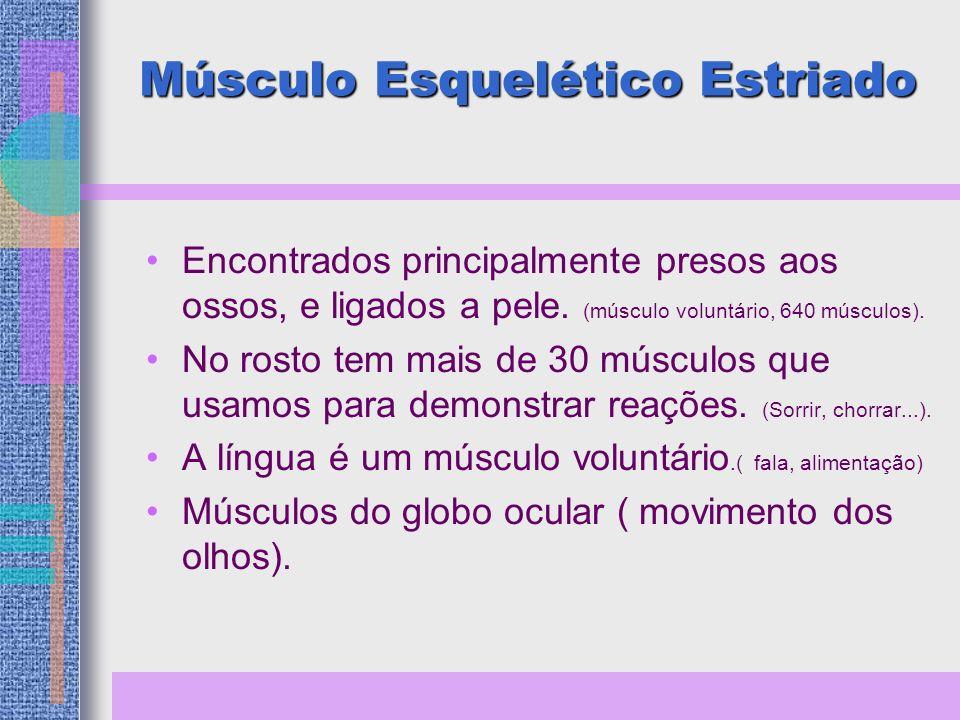 Músculo Esquelético Estriado