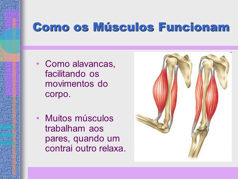 Como os Músculos Funcionam