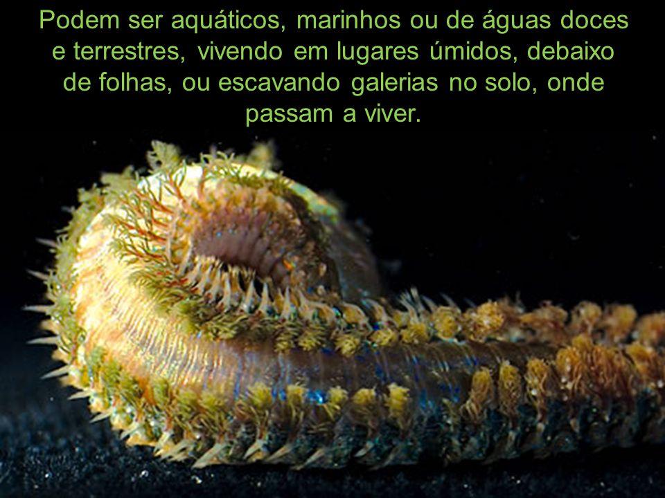 Podem ser aquáticos, marinhos ou de águas doces e terrestres, vivendo em lugares úmidos, debaixo de folhas, ou escavando galerias no solo, onde passam a viver.