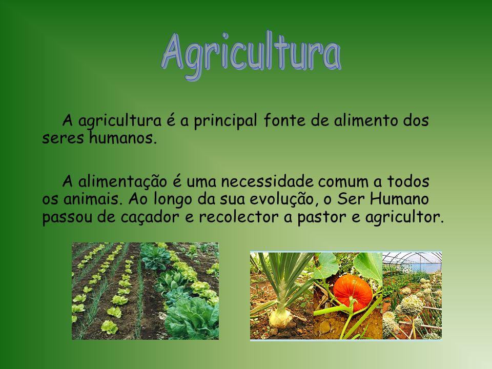 Agricultura A agricultura é a principal fonte de alimento dos seres humanos.