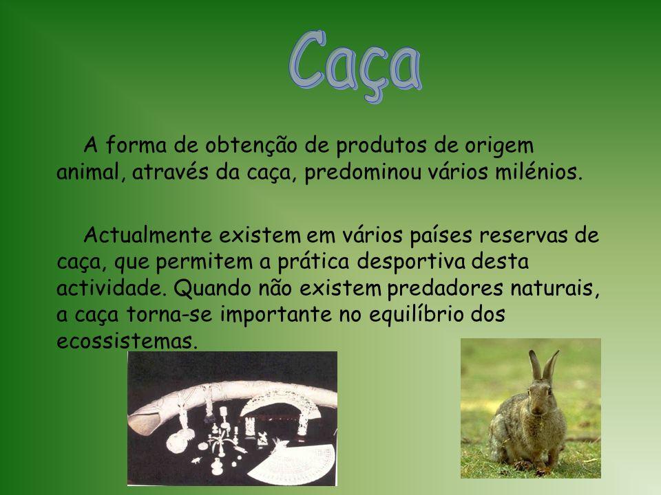 Caça A forma de obtenção de produtos de origem animal, através da caça, predominou vários milénios.