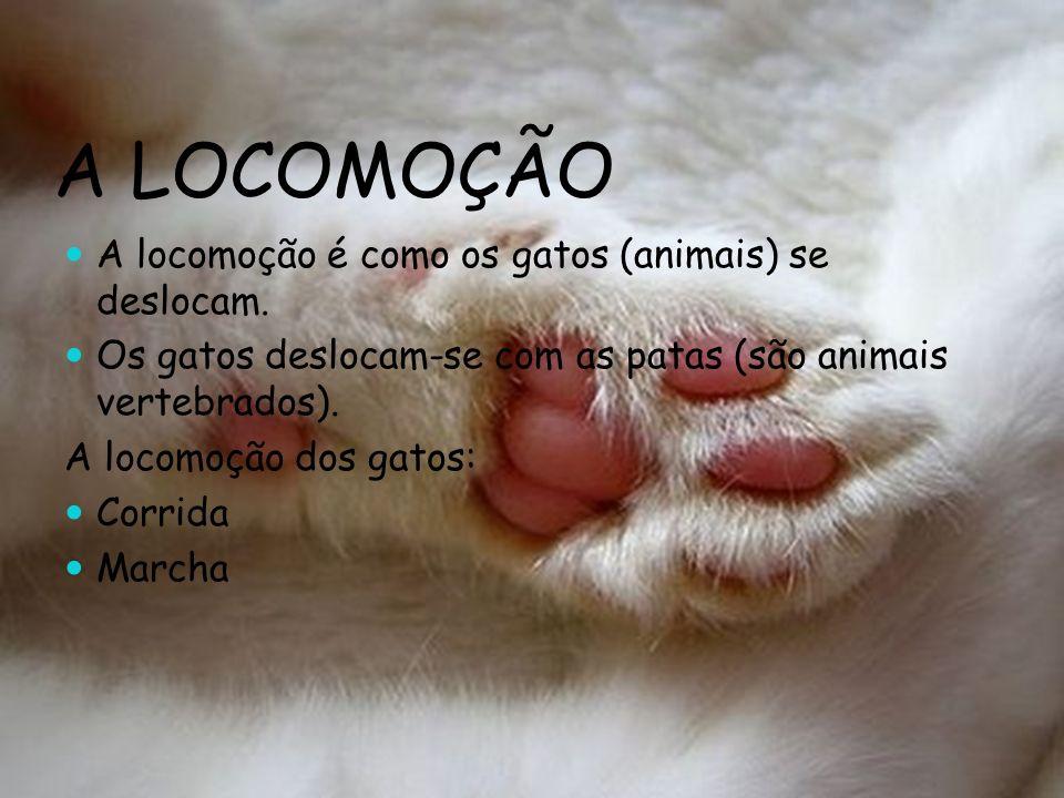 A LOCOMOÇÃO A locomoção é como os gatos (animais) se deslocam.