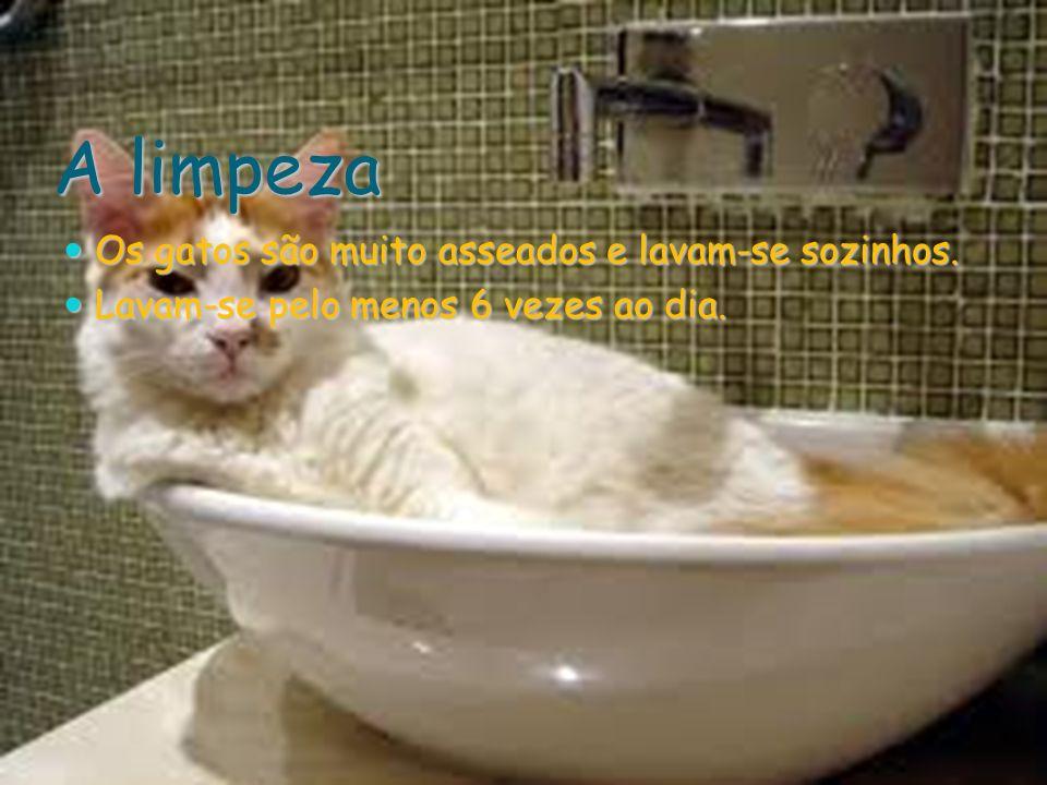 A limpeza Os gatos são muito asseados e lavam-se sozinhos.