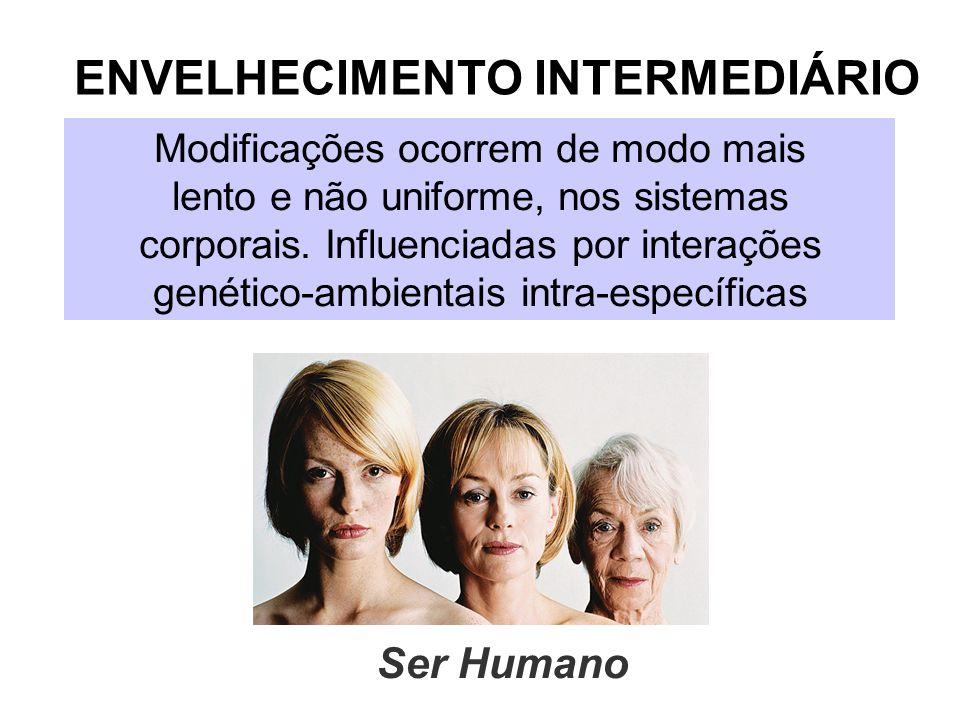 ENVELHECIMENTO INTERMEDIÁRIO