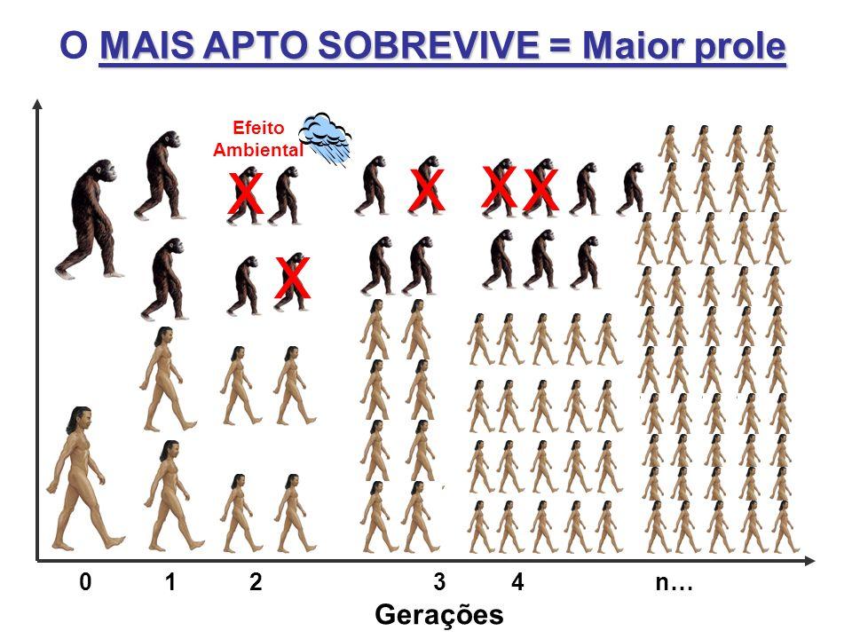 X X X X X O MAIS APTO SOBREVIVE = Maior prole Gerações 0 1 2 3 4 n…
