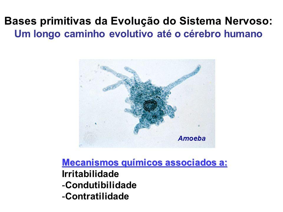 Bases primitivas da Evolução do Sistema Nervoso: