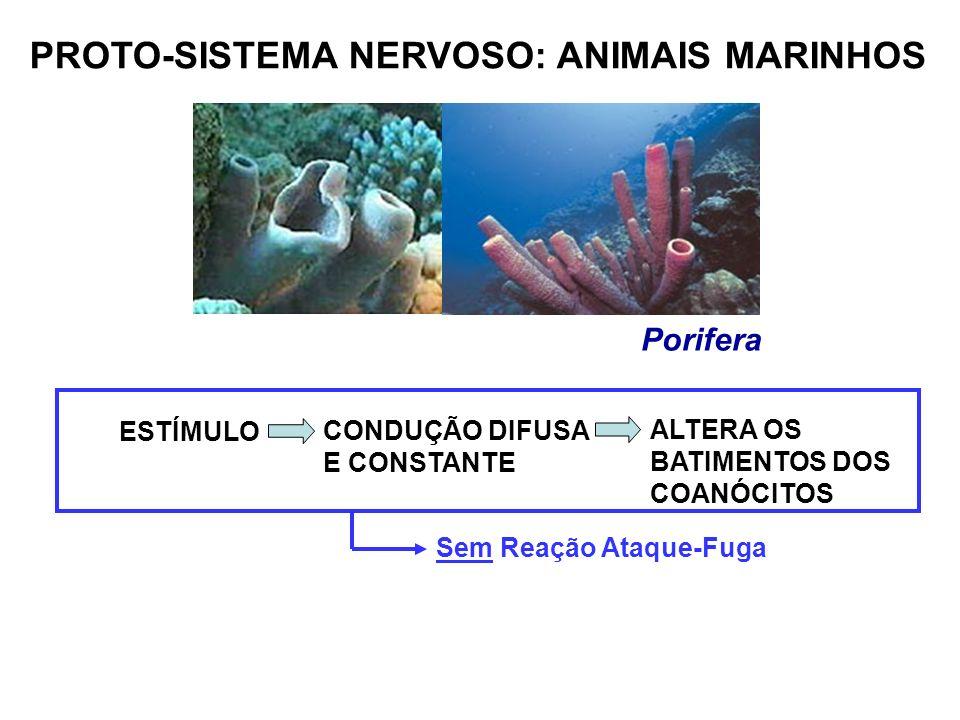 PROTO-SISTEMA NERVOSO: ANIMAIS MARINHOS