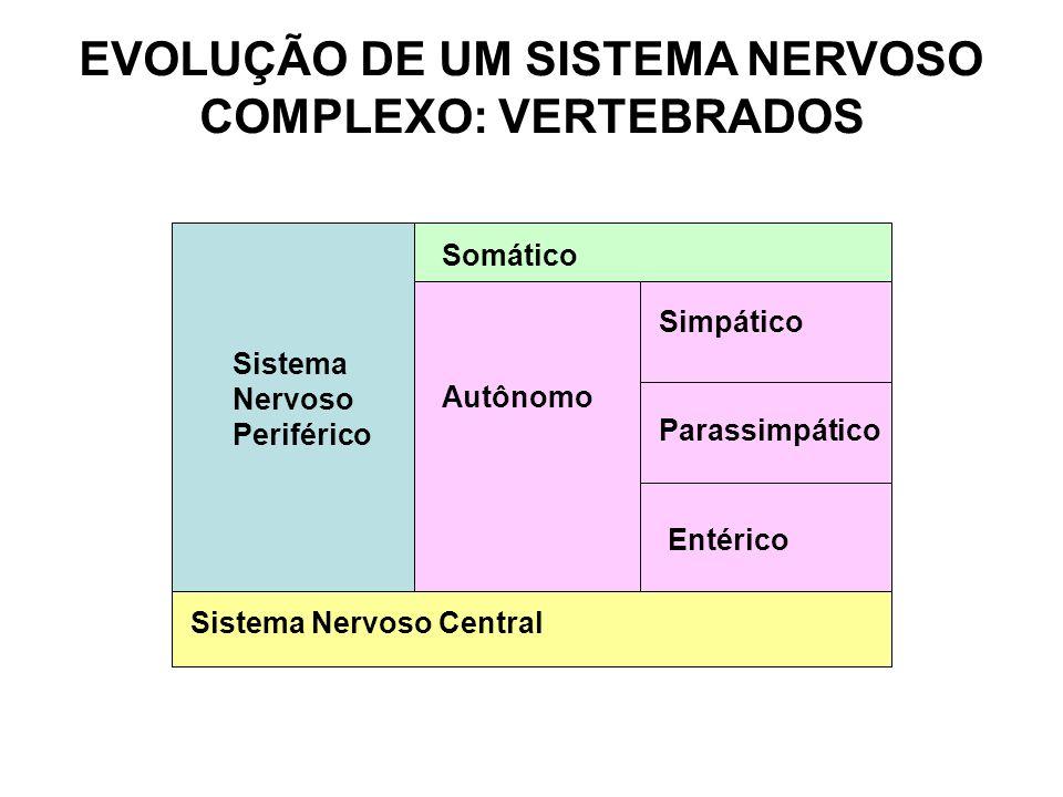 EVOLUÇÃO DE UM SISTEMA NERVOSO COMPLEXO: VERTEBRADOS