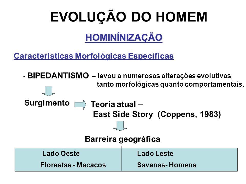EVOLUÇÃO DO HOMEM HOMINÍNIZAÇÃO