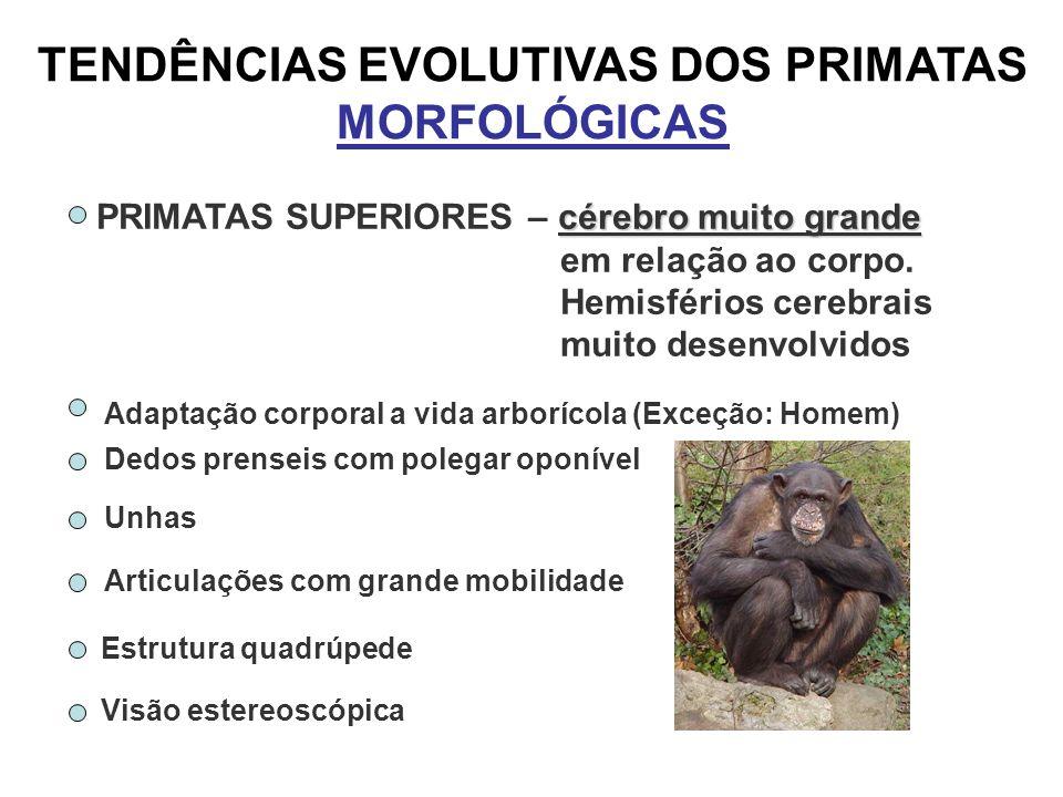 TENDÊNCIAS EVOLUTIVAS DOS PRIMATAS