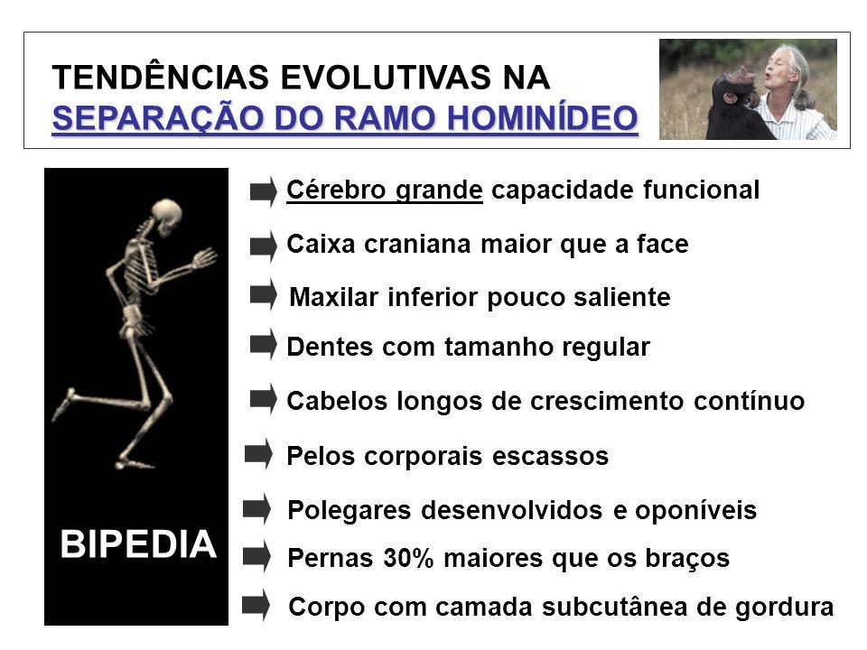 BIPEDIA TENDÊNCIAS EVOLUTIVAS NA SEPARAÇÃO DO RAMO HOMINÍDEO