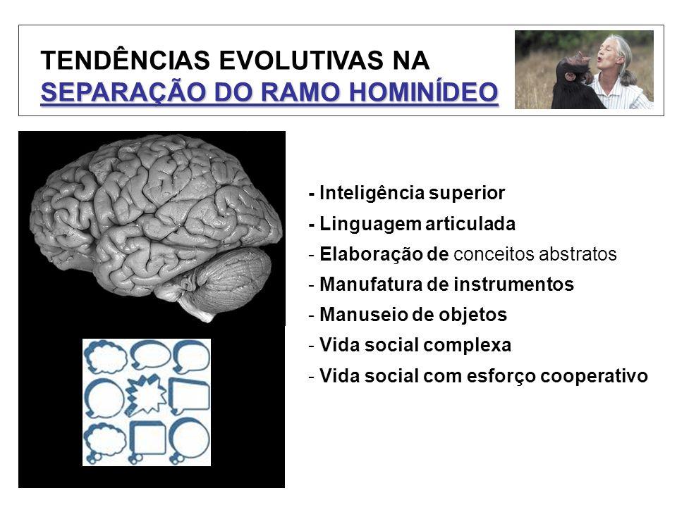 TENDÊNCIAS EVOLUTIVAS NA SEPARAÇÃO DO RAMO HOMINÍDEO