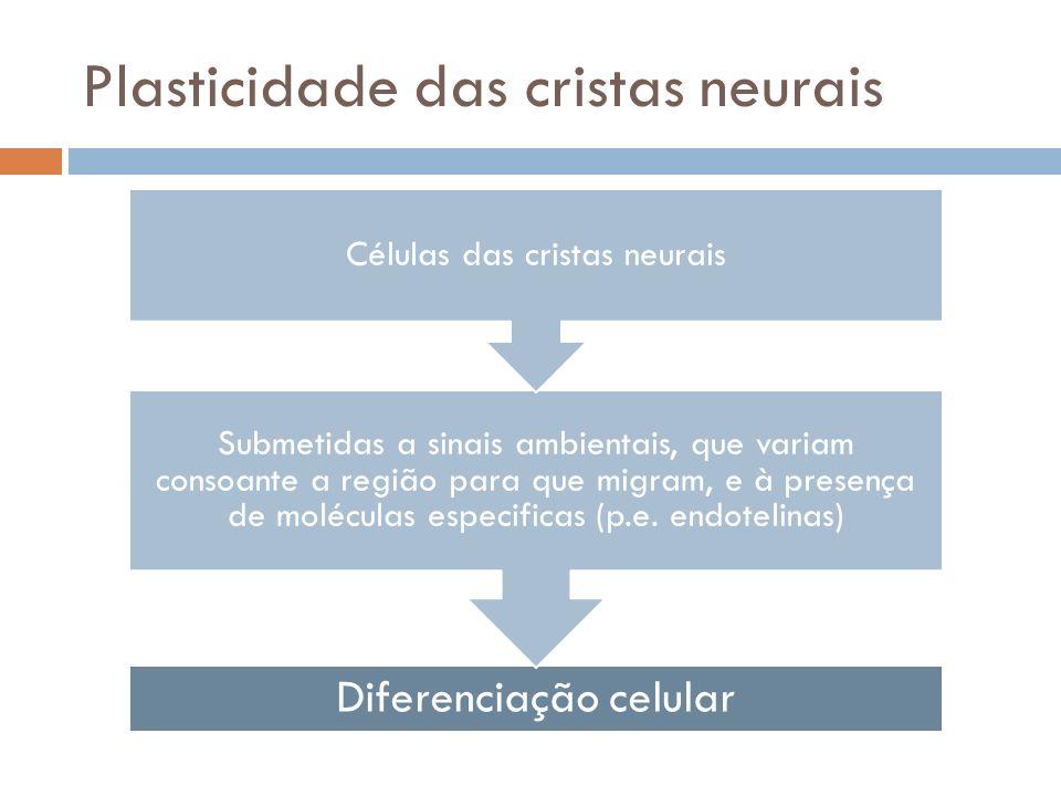 Plasticidade das cristas neurais