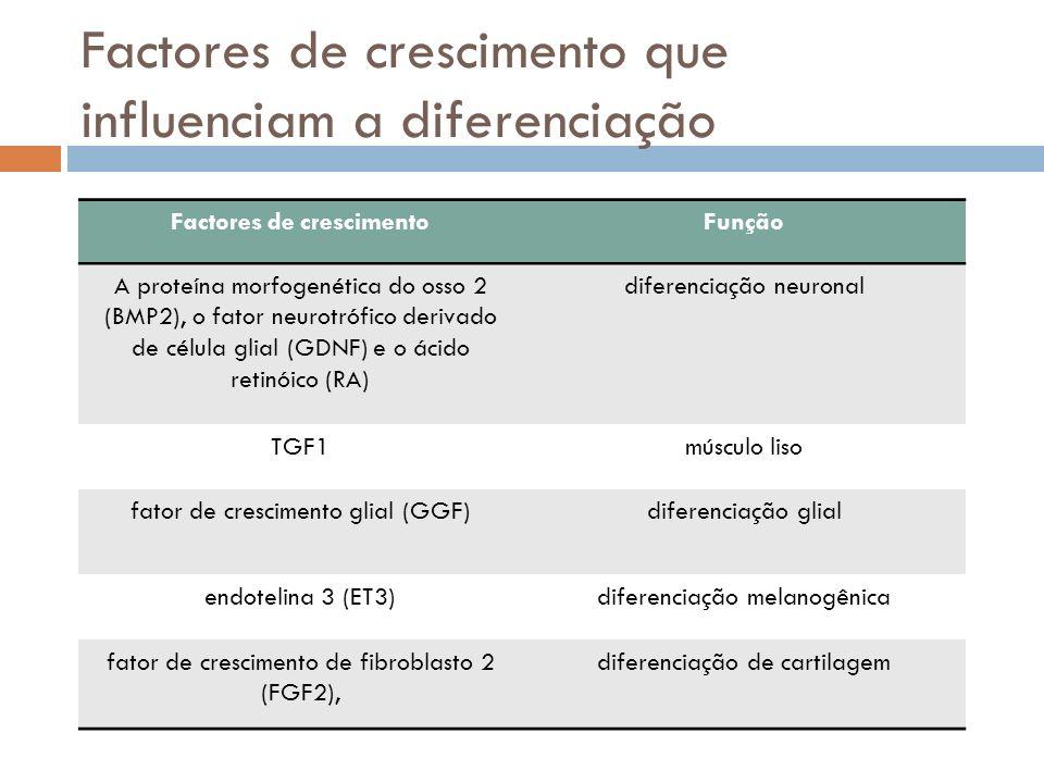 Factores de crescimento que influenciam a diferenciação