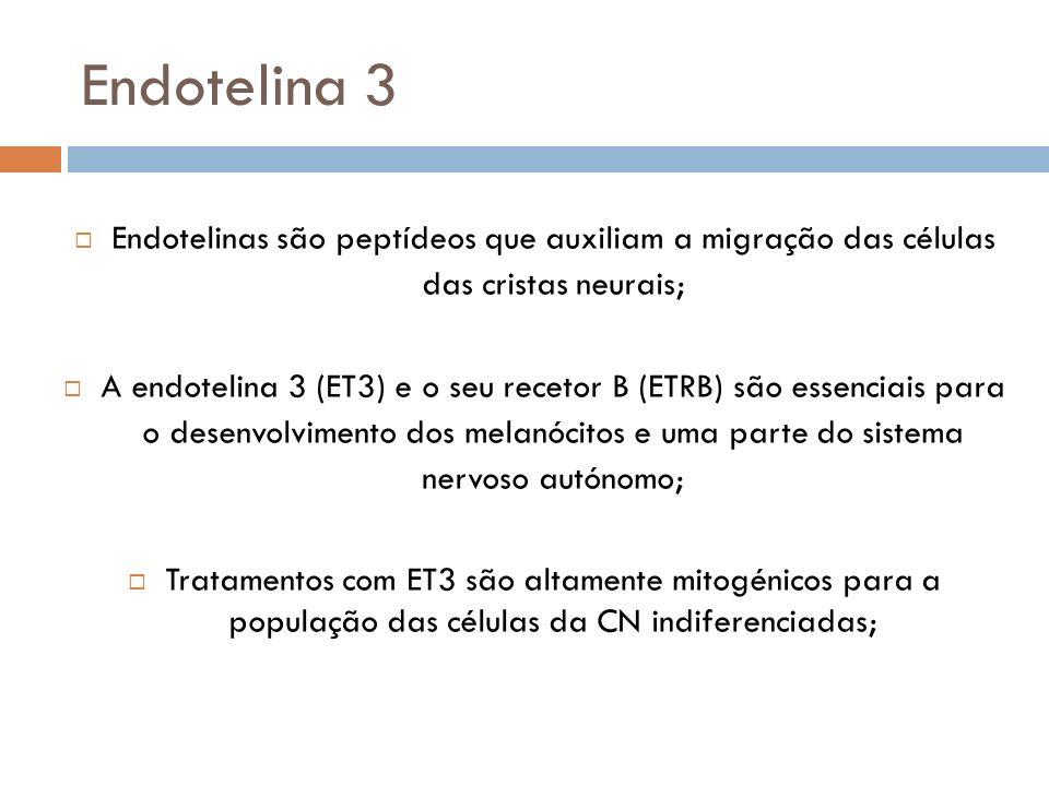 Endotelina 3 Endotelinas são peptídeos que auxiliam a migração das células das cristas neurais;