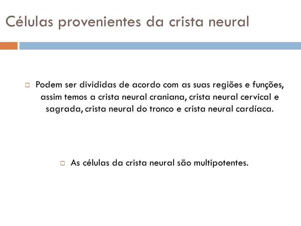 Células provenientes da crista neural