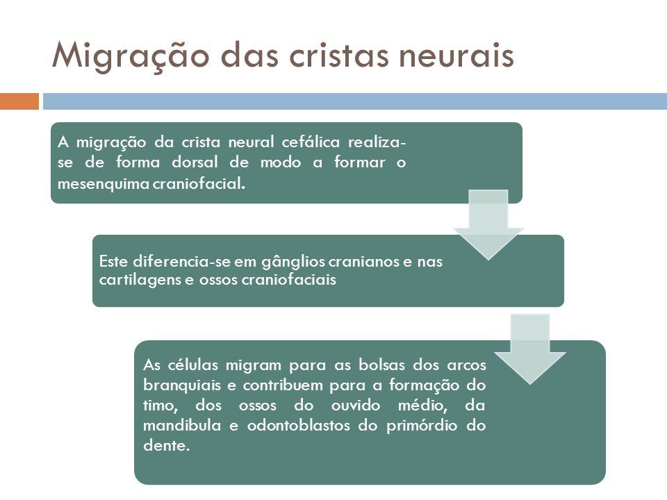 Migração das cristas neurais