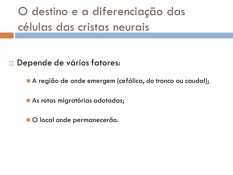 O destino e a diferenciação das células das cristas neurais