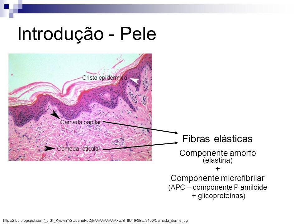 Introdução - Pele Fibras elásticas Componente amorfo (elastina) +