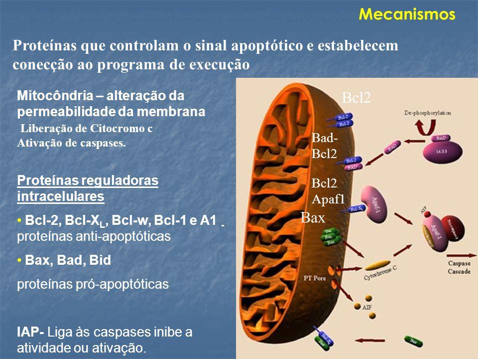 Mecanismos Proteínas que controlam o sinal apoptótico e estabelecem conecção ao programa de execução.