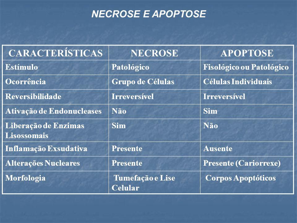 NECROSE E APOPTOSE CARACTERÍSTICAS NECROSE APOPTOSE Estímulo