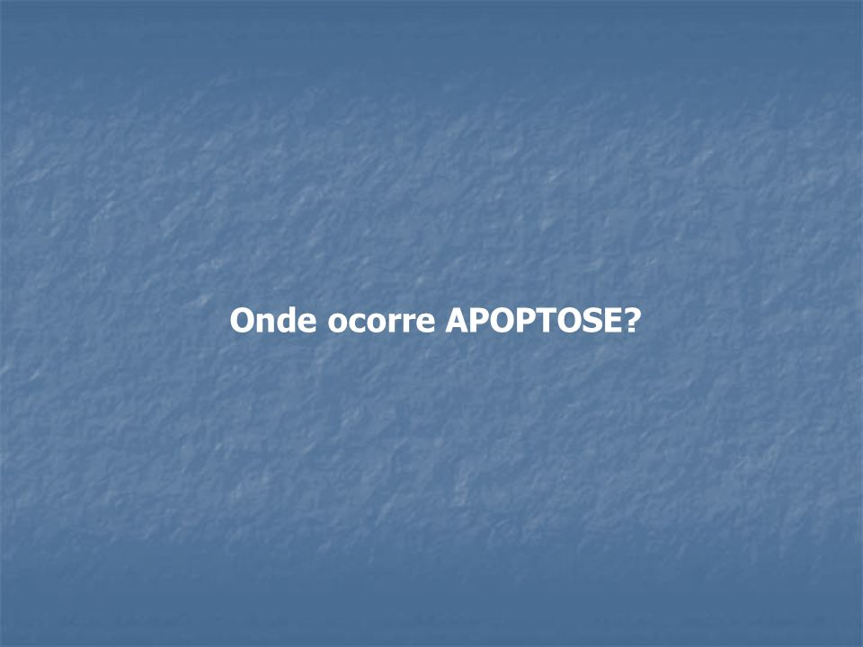 Onde ocorre APOPTOSE