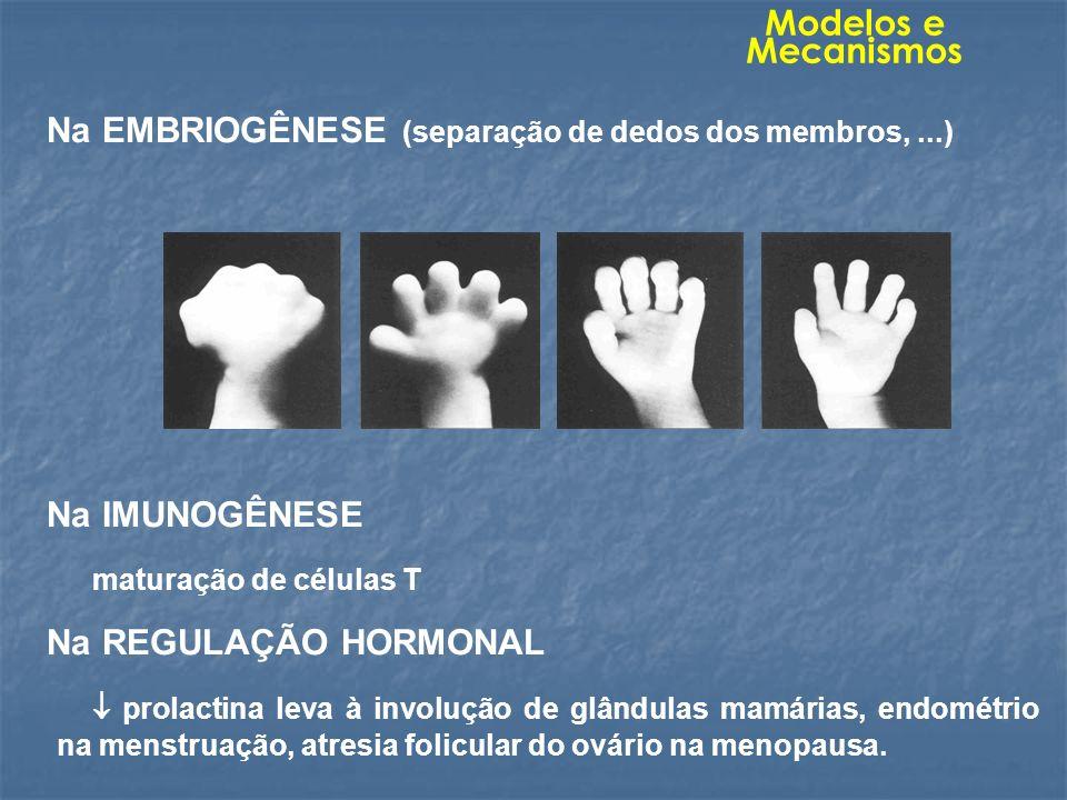 Modelos e Mecanismos Na EMBRIOGÊNESE (separação de dedos dos membros, ...) Na IMUNOGÊNESE. maturação de células T.