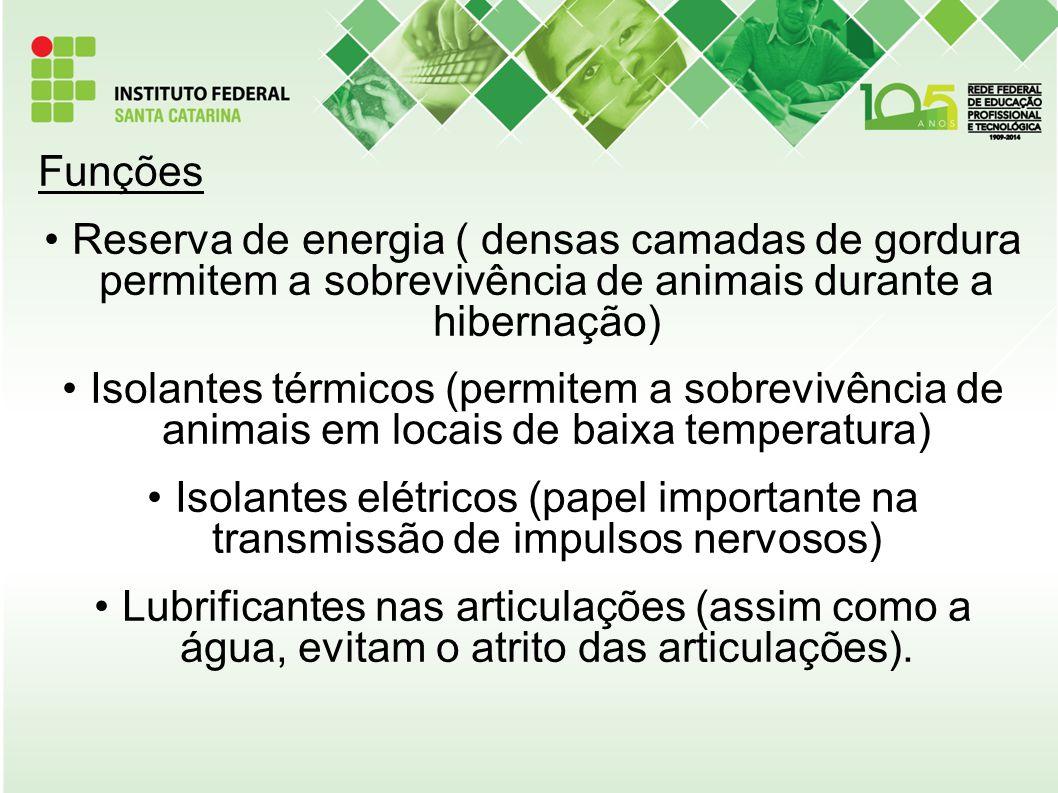 Funções Reserva de energia ( densas camadas de gordura permitem a sobrevivência de animais durante a hibernação)