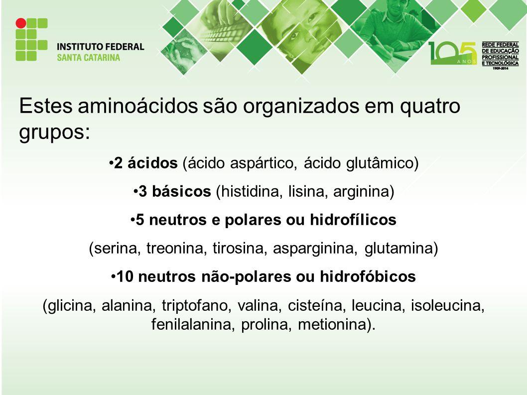 Estes aminoácidos são organizados em quatro grupos:
