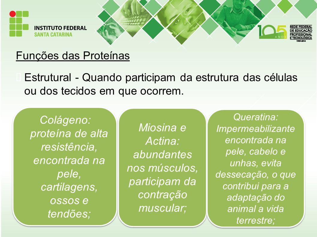 Funções das Proteínas Estrutural - Quando participam da estrutura das células ou dos tecidos em que ocorrem.