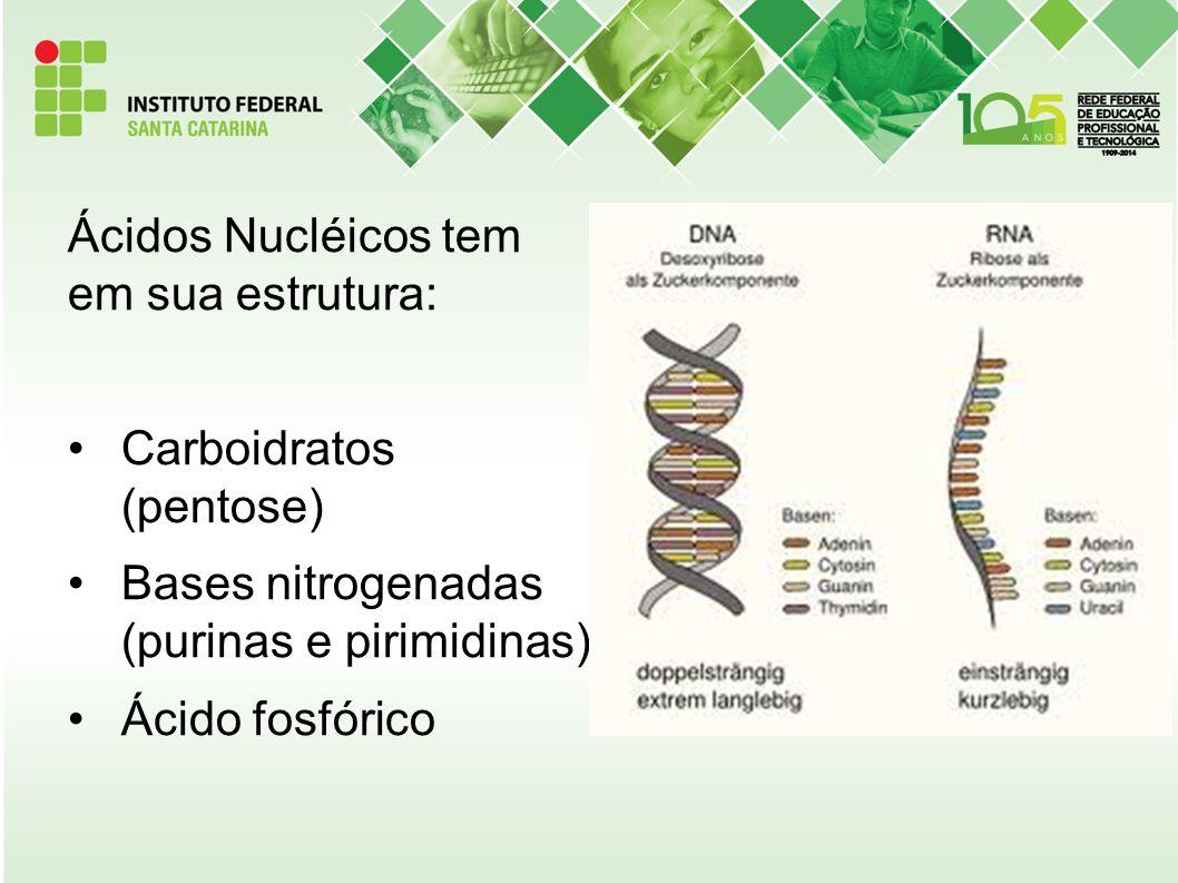 Ácidos Nucléicos tem em sua estrutura: