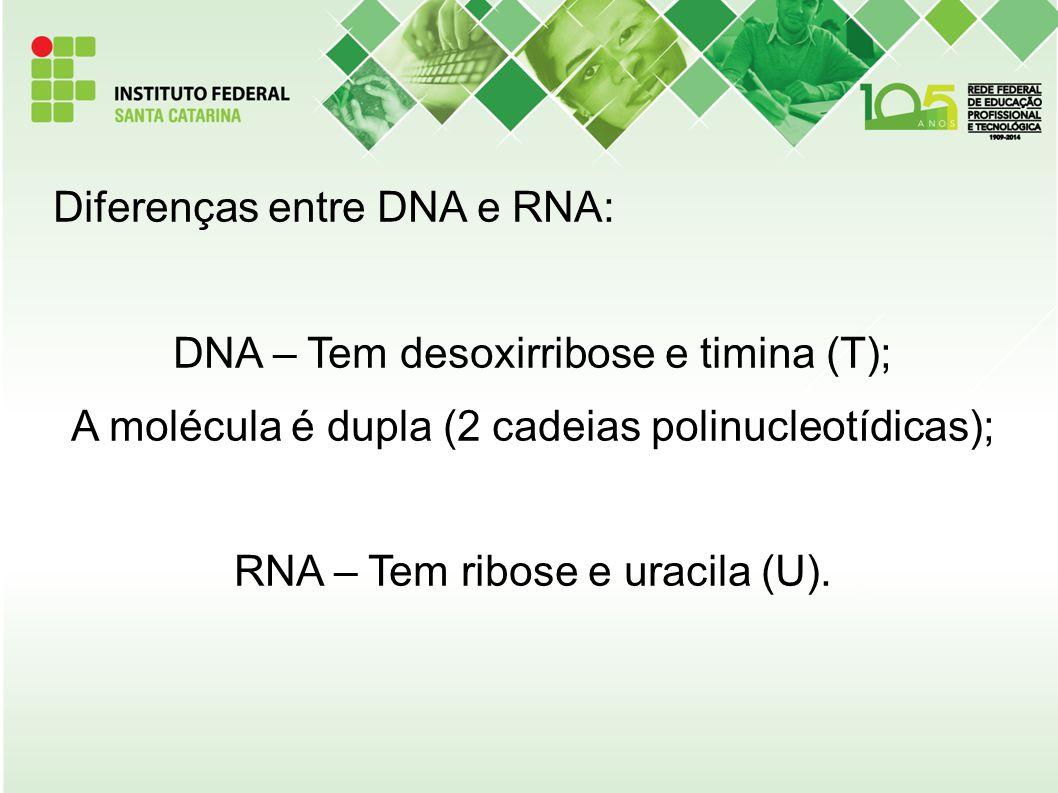 Diferenças entre DNA e RNA: DNA – Tem desoxirribose e timina (T); A molécula é dupla (2 cadeias polinucleotídicas); RNA – Tem ribose e uracila (U).